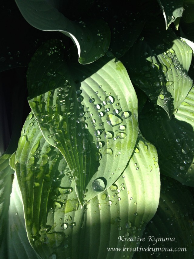 Water on the leaves
