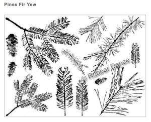 pine-fir-yew